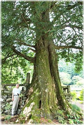 桁山の榧の木